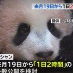 パンダの赤ちゃん(上野動物園)シャンシャンの公開時間は?最新画像や混雑も