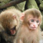 中国で誕生体細胞クローン猿の世界の反応は?名前や性別やクローン人間の実在も