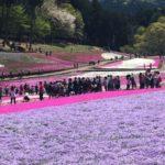 秩父羊山公園の芝桜2019GW混雑具合や電車でのアクセスは?
