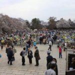 小金井公園桜まつり2019駐車場の混雑状況口コミは?タクシー料金も