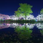 茂原公園夜桜や屋台の時間いつまで?臨時駐車場やタクシー料金も