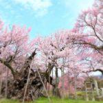 山梨山高神代桜まつり2019見頃期間やアクセス方法!混雑や駐車場も