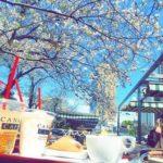 桜が見えるカフェやレストラン東京都内6選!ランチ予約や場所や値段も
