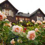 旧古河庭園バラ2018年見ごろは早め!音楽会やライトアップ日程や時間も
