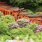 根津神社つつじ祭りの期間や時間は?開花状況はライブカメラで
