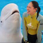 横浜八景島シーパラダイス水族館や遊園地の営業時間は?GW夏休みも