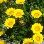 夏の花といえば?花壇を彩る暑さに強くて育てやすい品種5選!