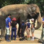夏休みは動物園の飼育体験2018がおすすめ!応募方法や抽選は?