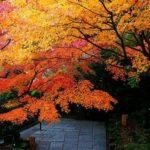 鎌倉長谷寺の紅葉の見頃やライトアップ期間いつから?時間や感想口コミも