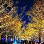 昭和記念公園の紅葉がきれいな場所は?イチョウ並木のライトアップも