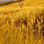 仙石原すすき草原へ車のアクセスは?駐車場から何分歩く?住所や感想口コミも