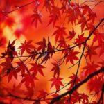 高尾山の紅葉の見ごろや混雑状況口コミは?ピーク時間や駐車場も