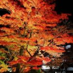 神奈川の紅葉ライトアップが美しい名所3選!時間やアクセス情報も