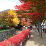 河口湖の絶景紅葉もみじ回廊の現在の色づきは?ライブカメラで見頃をチェック!