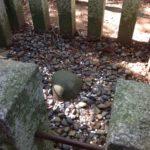 香取神宮と奥宮パワースポットの場所|要石や三本杉のご利益ほか
